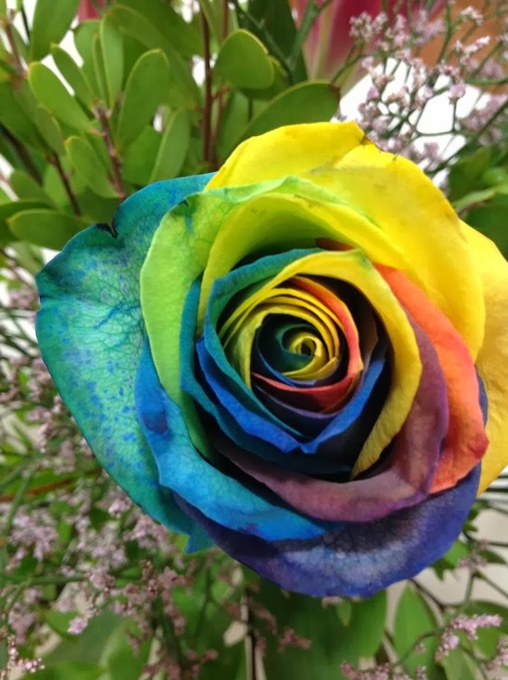 Flower homes rainbow roses for Where can i buy rainbow roses