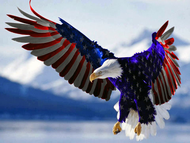 american, bald eagle, fourth of july, birthday