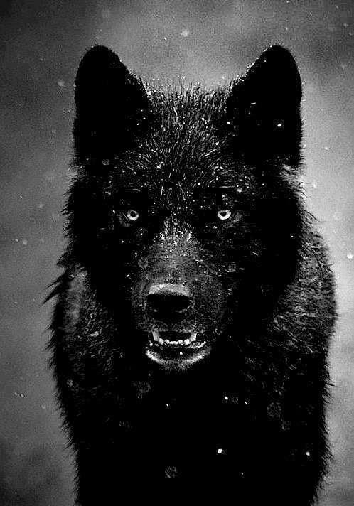 Lobo...
