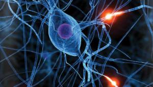 Epilepsia: modelos matemáticos para compreensão e tratamento da doença