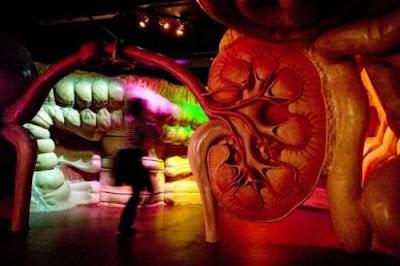 اغرب متحف , متحف لتفاصيل جسم الانسان 13
