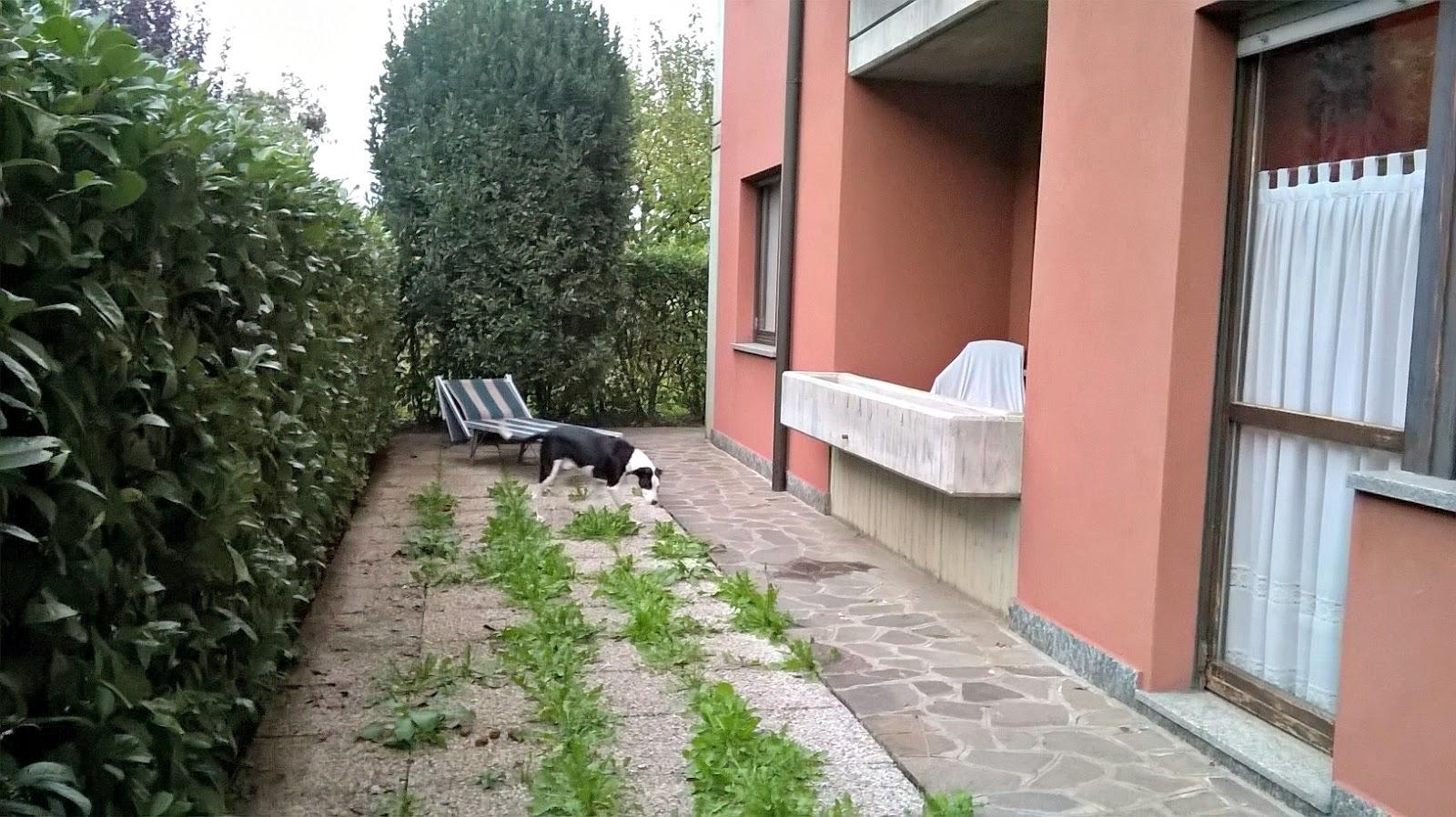 Olivati immobiliare bergamo torreboldone affare ampio - Il giardino segreto dvd vendita ...