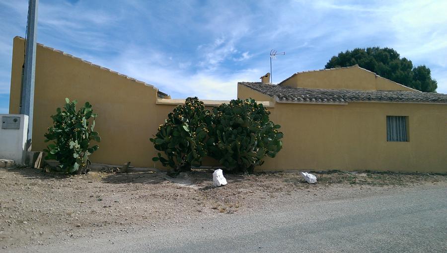 Yecla, chumberas (2014)