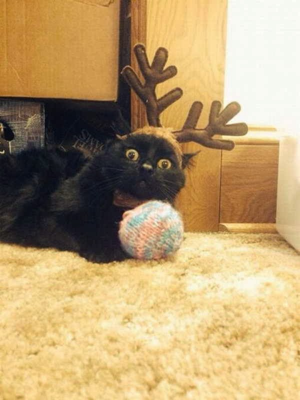 Funny cats - part 80 (40 pics + 10 gifs), cat wears deer antler hat