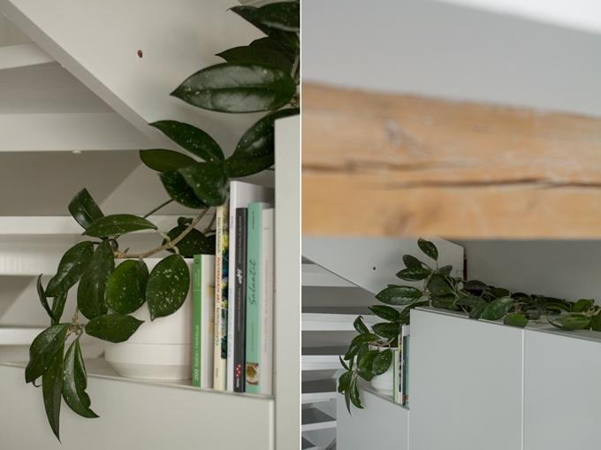 vihersisustaminen viherkasvi keittiössä posliinikukka vanhanajan viherkasvi