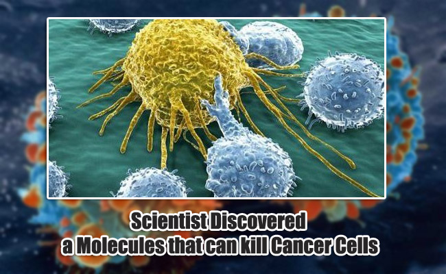 Scientist Discovered a Molecules that can kill Cancer Cells