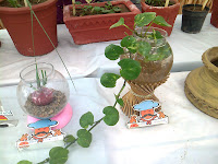 grow money plant water