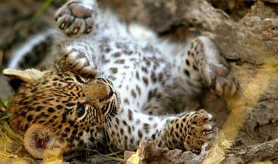 fotos de animales salvajes bebes - Estas fotos de nutrias bebé son muy tiernas Mascotas
