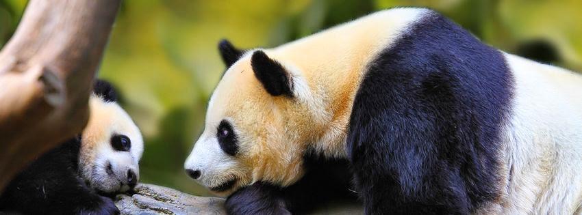 Une couverture facebook panda