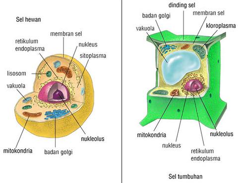 BIOLOGI SEL (STRUKTUR DAN FUNGSI SEL)