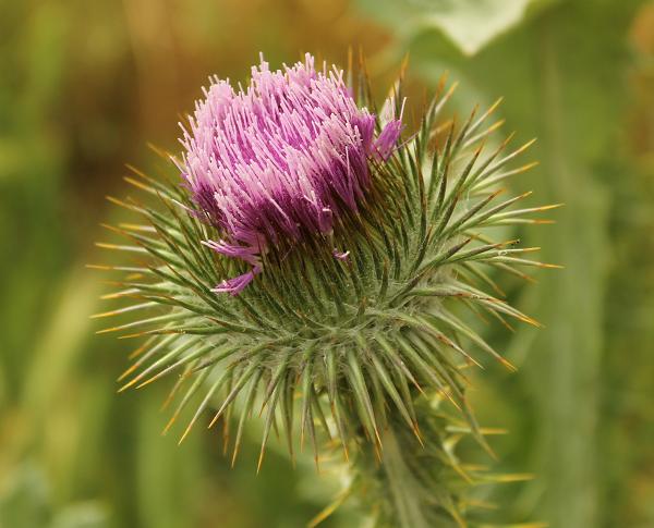Fotos De Flores Silvestres Y Sus Nombres - Catálogo de flores Flores de Ocoa Digalo con Flores