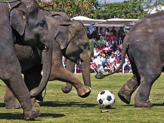 lễ hội voi - những lễ hội ở Thái Lan