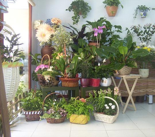 Arte y jardiner a plantas de interior un rinc n de la for Plantas de interior madrid