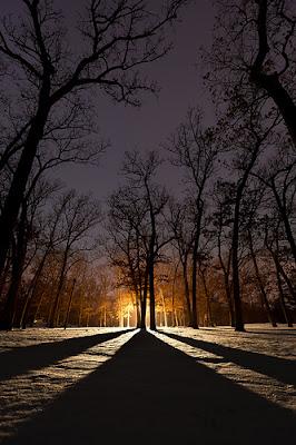 contoh foto siluet pohon