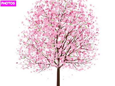 how to draw a cherry blossom tree step by step