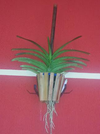 Orquídea Vanda...