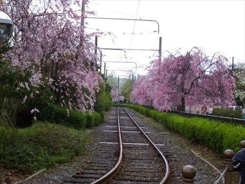 京都市下京区|梅小路公園
