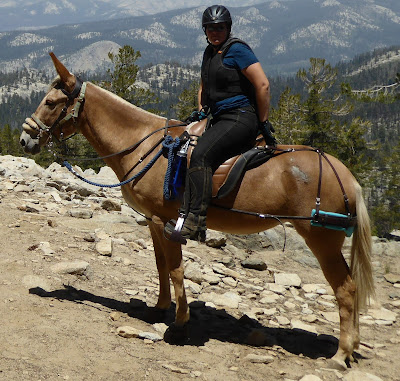 Do It Yourself Horse Ownership -- How to make breeching or britching padding