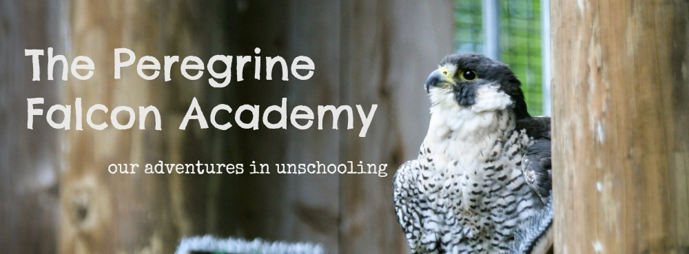 The Peregrine Falcon Academy