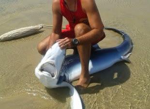 Tubarão é capturado na Praia do Futuro na manhã desta sexta