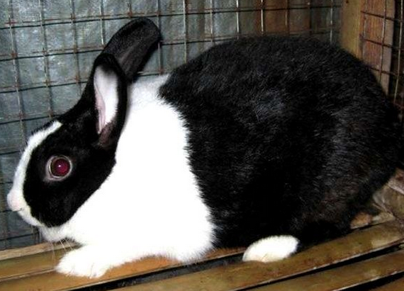 Contoh Descriptive Text About Rabbit Terbaru 2015 dan Artinya