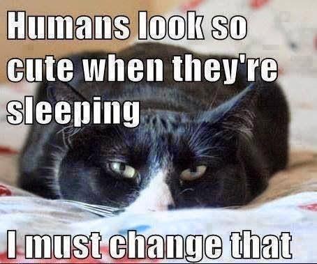 Dark Cat Memes