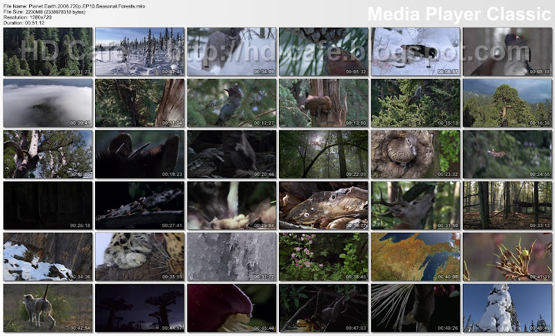 Planet Earth - Episode 10 - Seasonal Forests