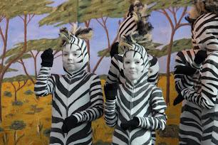 Zebragruppen 8-16 år