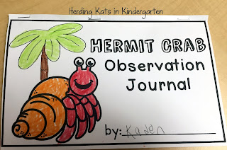 https://www.teacherspayteachers.com/Product/Hermit-Crab-Classroom-Pet-2091509
