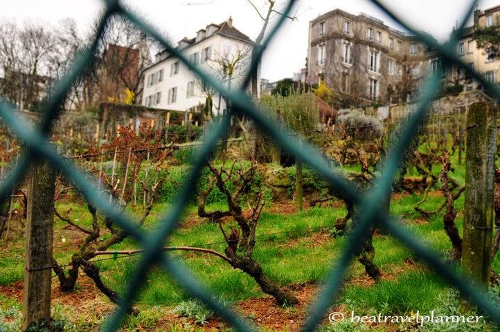 Vigna di Montmartre