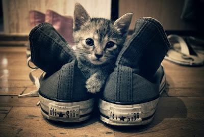 gato entre All Stars