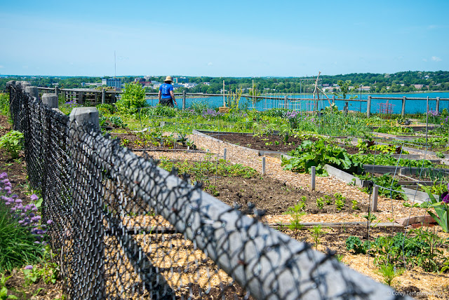 Portland, Maine June 2015 North Street Community Garden on Munjoy Hill. Photo by Corey Templeton.