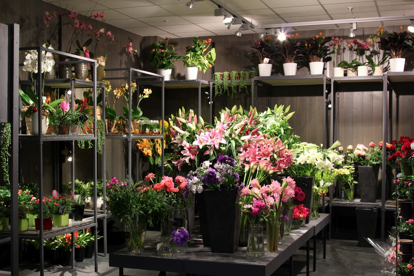 Divine flor al mfh part 5a geneva gruyere and bern of for Flower shop design layouts