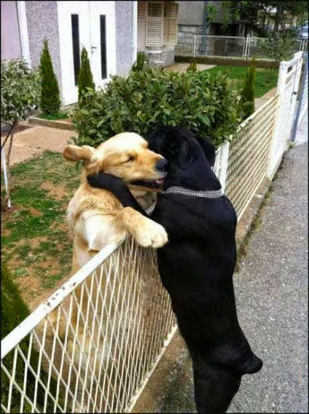 animal-kissing-pictures-5
