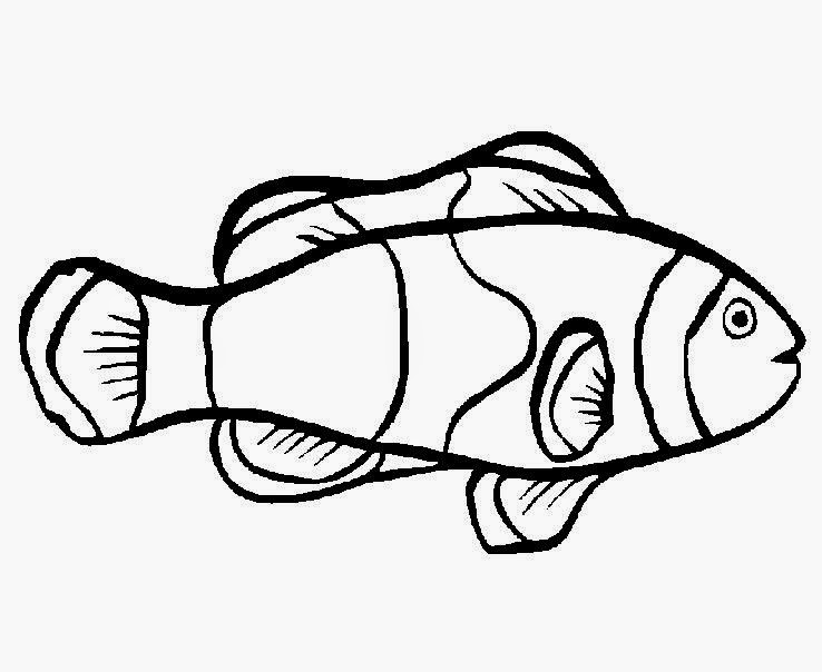 Betta Fish Coloring Pictures