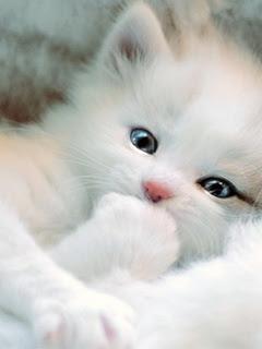 Картинки На Телефон Котят