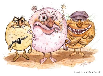 Bactérias provam a Teoria da Evolução?