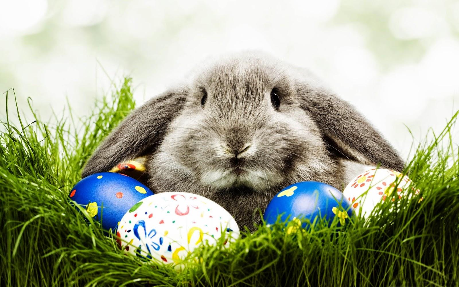 paskalya bayramı, tavşan, yumurta ve çikolata