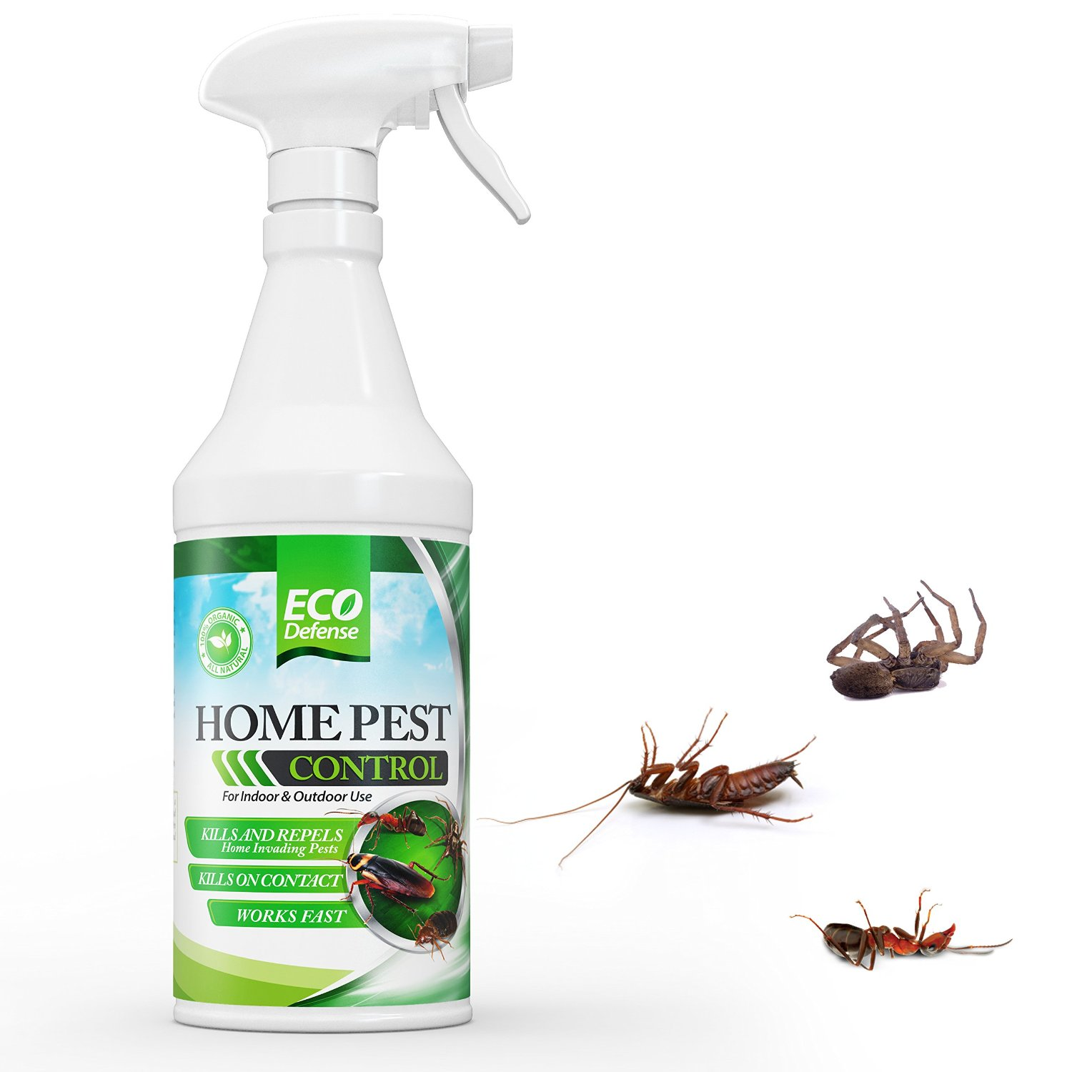 Pest Control For Veicles Daytona Beach Fl