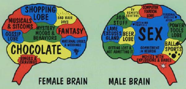 Perbedaan ukuran otak pria dan wanita