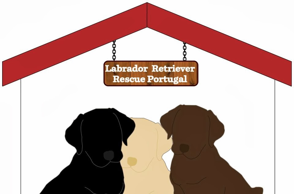 Labrador Retriever Rescue Portugal
