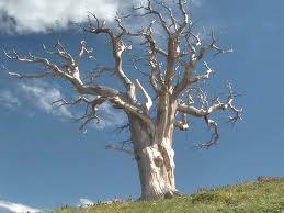 Pohon Bekas Tabrakan Ust. Uje dikeramatkan, Singkirkan Pohon yang berPotensi kesyirikan
