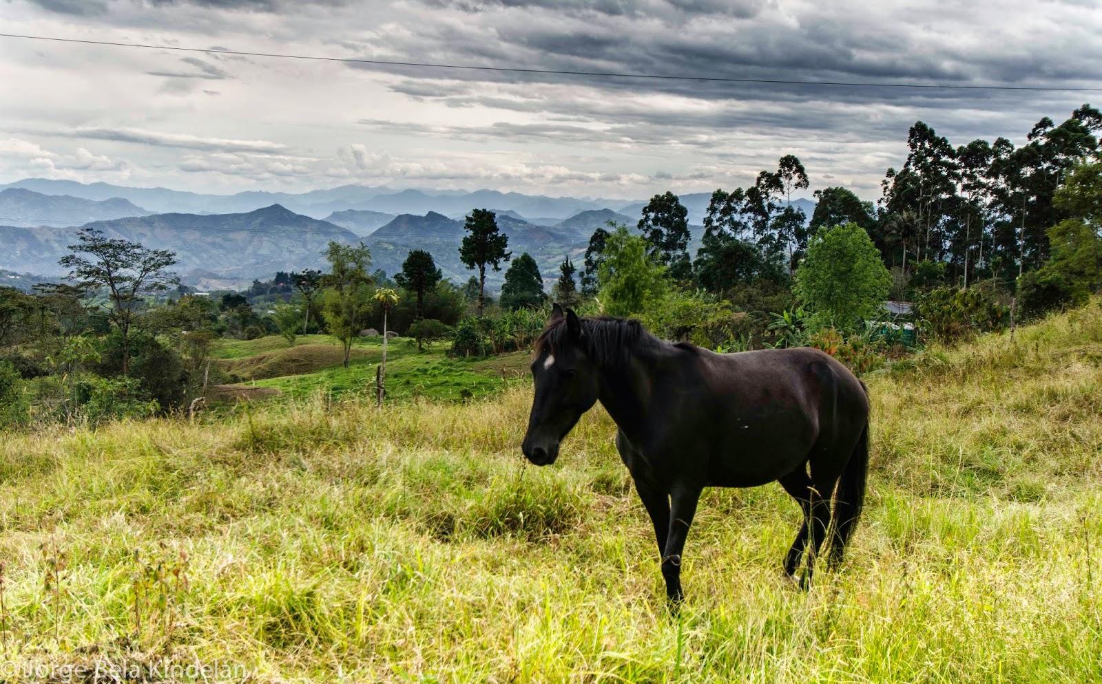 Animales y paisaje amenizan el paseo hacia Honda. Foto: Jorge Bela