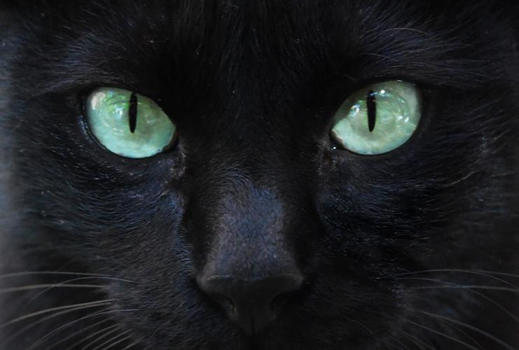 el gato de ojos verdes: