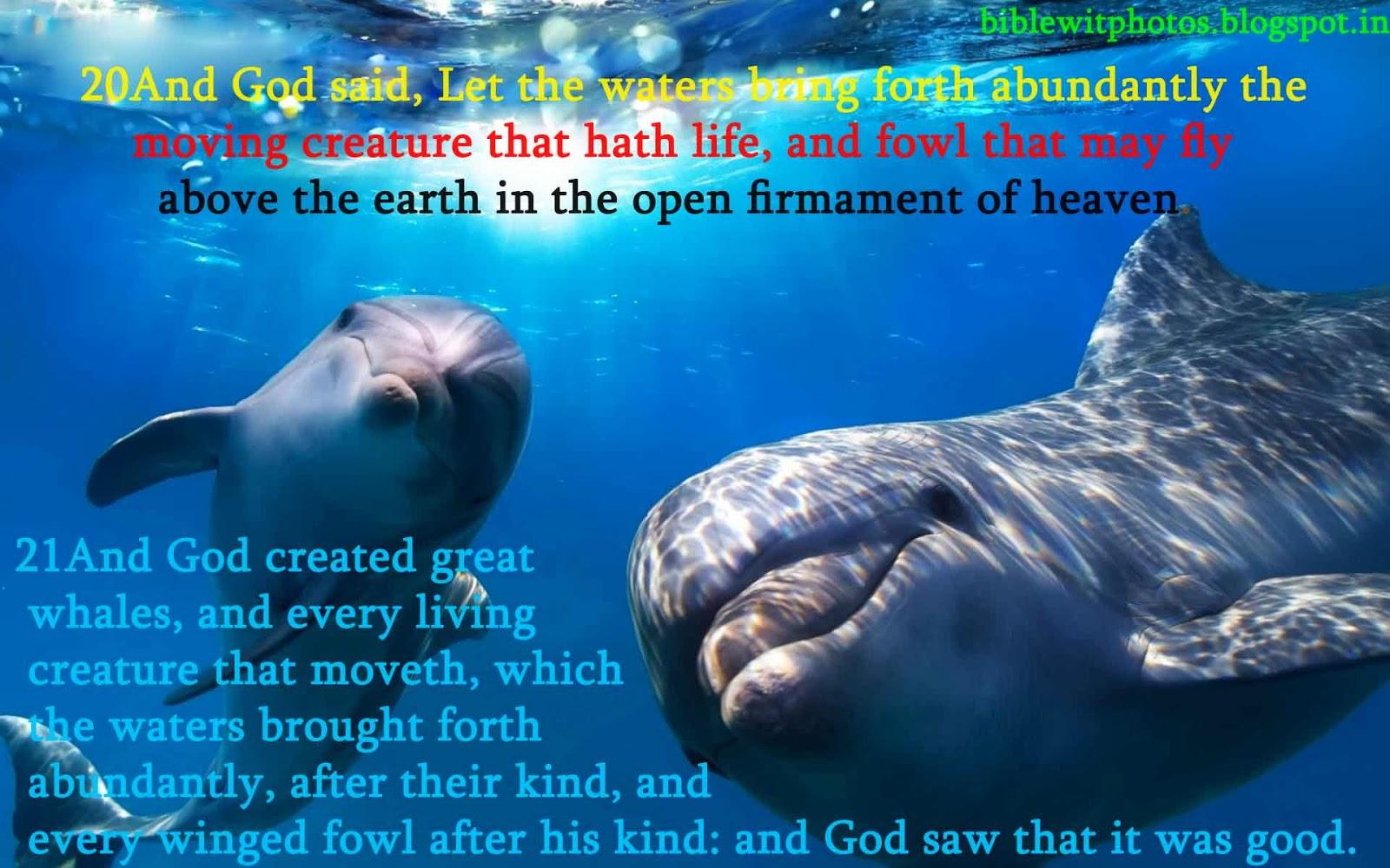 bible 105 worldview genesis