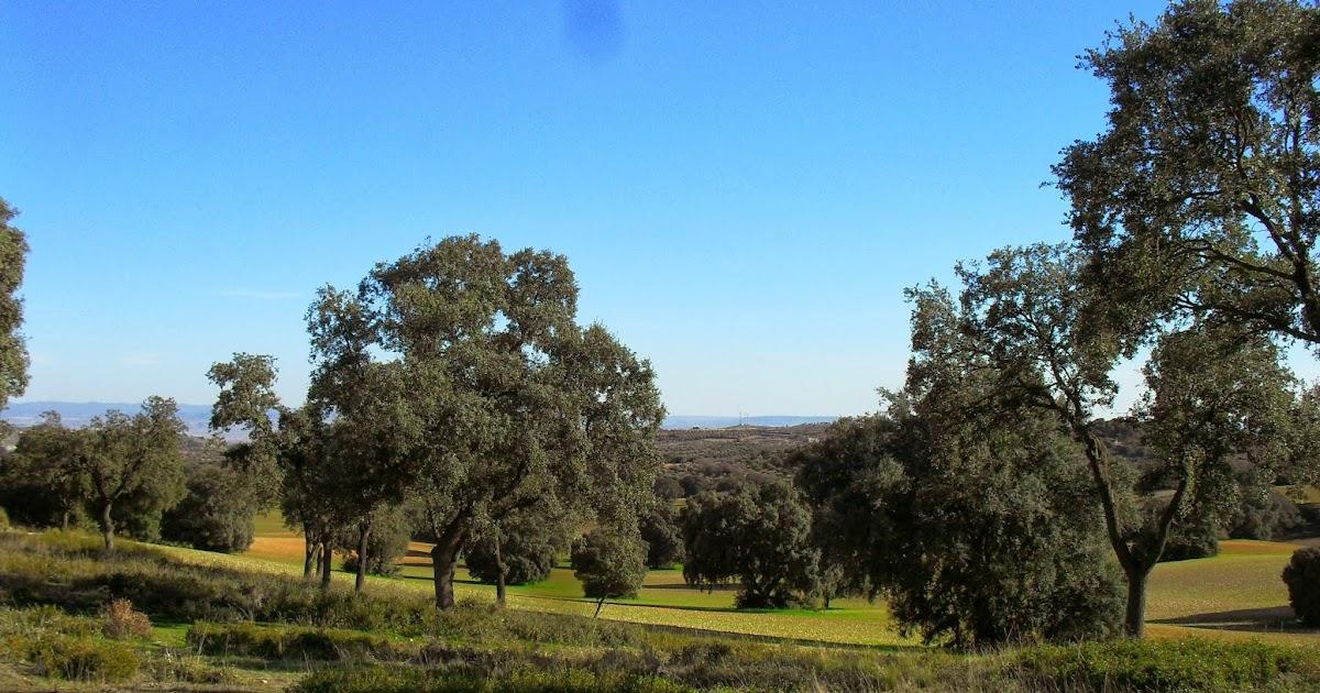 Arte y jardiner a dise o de jardines bosques de madrid - Diseno jardines madrid ...