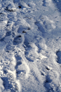 Trace de pas dans la neige de Berlin