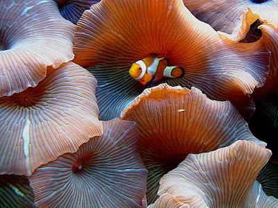 hình ảnh đẹp cá hề