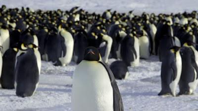 Como os pinguins conseguem se manter aquecidos?
