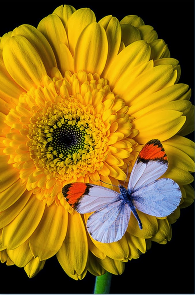 cuadros-de-mariposas-y-flores